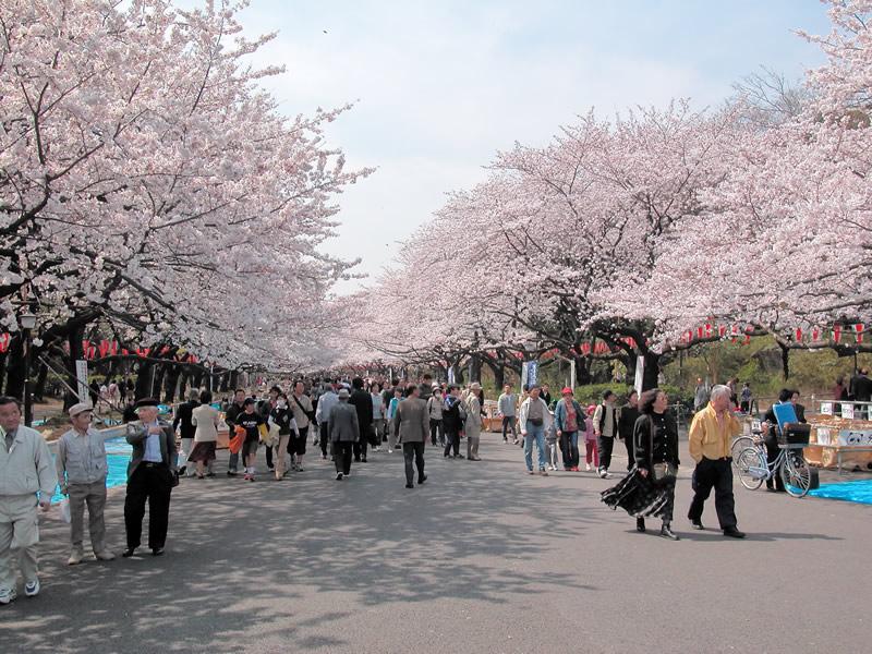 東京発フリー写真素材集/上野恩賜公園~その1