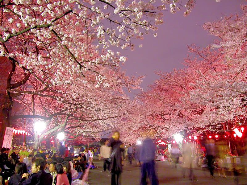 「上野公園 桜」の画像検索結果
